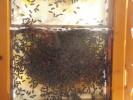 pszczoly_10